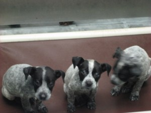 Adopt one of these abandoned pups